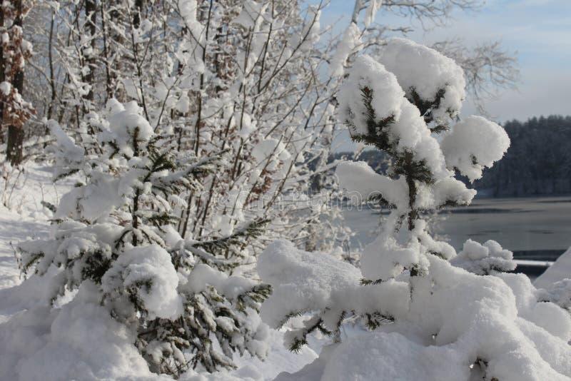 Hiver, neige, forêt en hiver, arbres dans la neige photographie stock