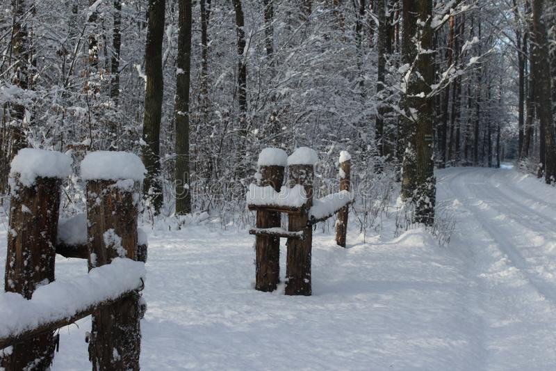 Hiver, neige, forêt en hiver, arbres dans la neige photographie stock libre de droits