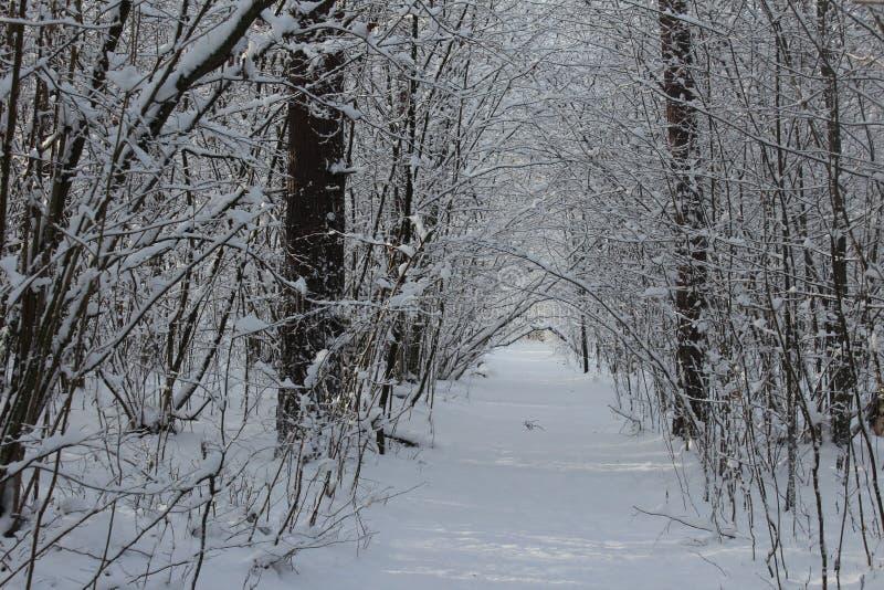 Hiver, neige, forêt en hiver, arbres dans la neige image libre de droits