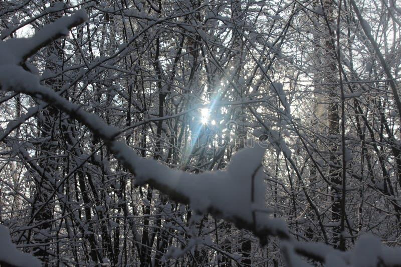 Hiver, neige, forêt en hiver, arbres dans la neige photos stock