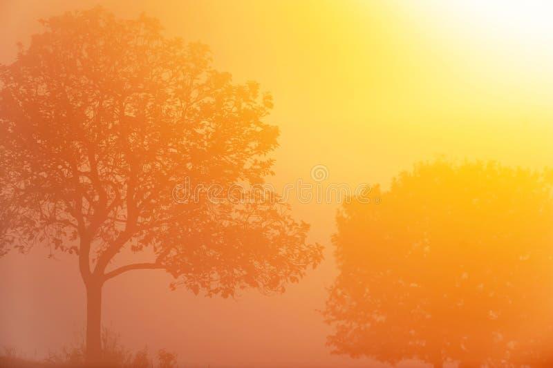 Hiver par lever de soleil, beau rayon de soleil d'or brillant sur des arbres de couples et champs tropicaux, forme d'art des bran photo libre de droits