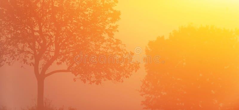 Hiver par lever de soleil, beau rayon de soleil d'or brillant sur des arbres de couples et champs tropicaux, forme d'art des bran images stock