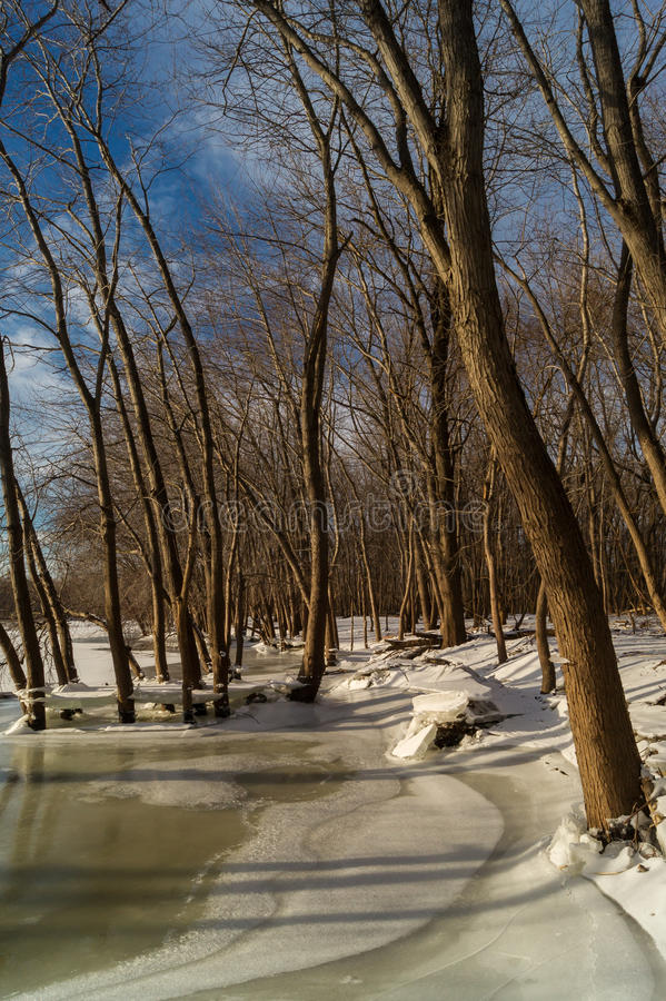 Hiver Shoreline photo libre de droits