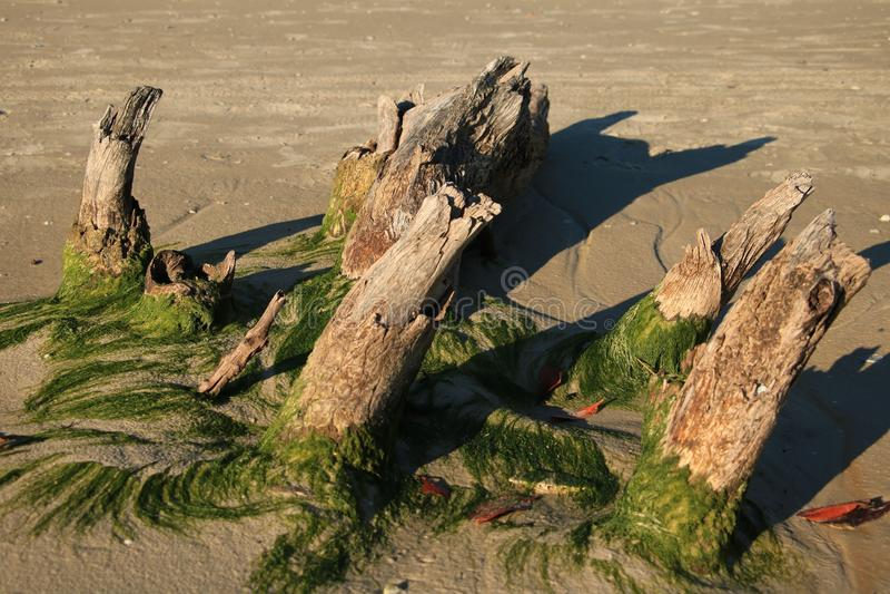 Hiver Sun de plage de Bunche photos stock