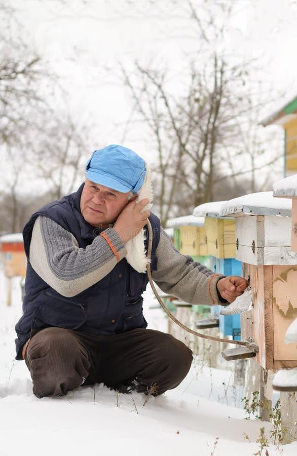 Hiver sur le rucher L'hiver d'apiculteur surveille le statut des abeilles dans la ruche Abeilles d'hiver dans les ruches dans la  photo libre de droits