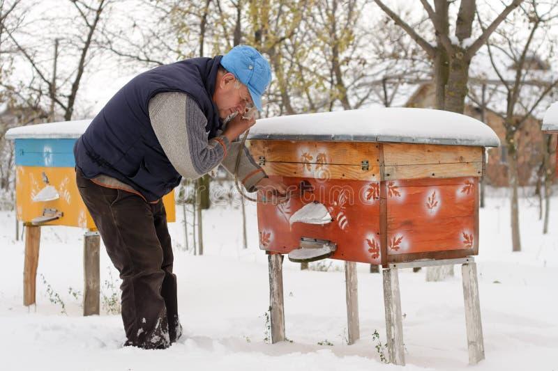 Hiver sur le rucher L'hiver d'apiculteur surveille le statut des abeilles dans la ruche Abeilles d'hiver dans les ruches dans la  image stock