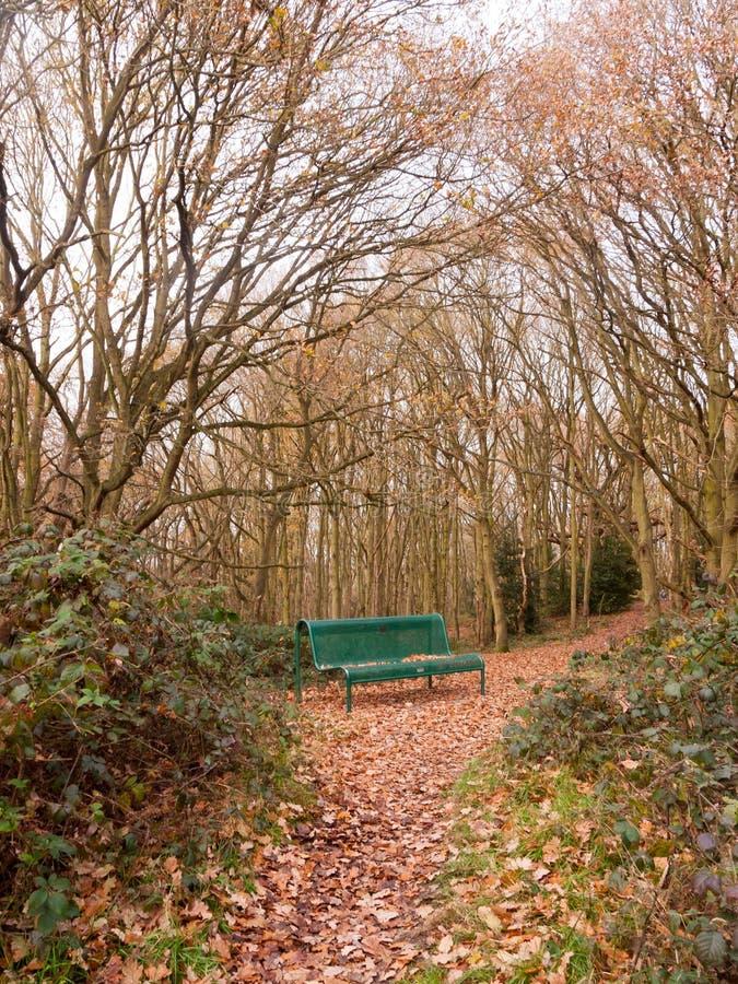 hiver vide d'automne de voûte d'arbre de solitude de banc public vert de forêt photographie stock