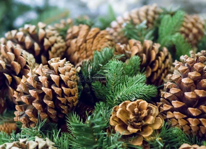 Hivers naturels de Noël de symbole de sapin de cèdre de cônes, fond de fête images libres de droits