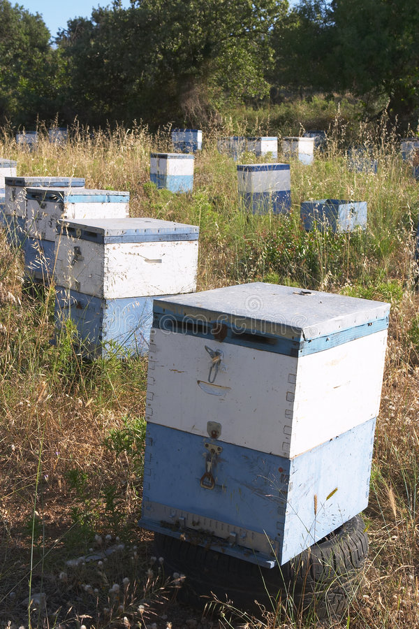 Download Hives 1 stock photo. Image of agriculture, island, apiculture - 169938