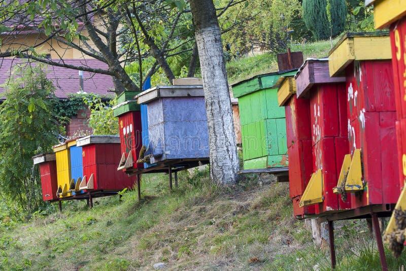 hives foto de stock royalty free