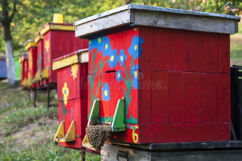 hives fotografia de stock