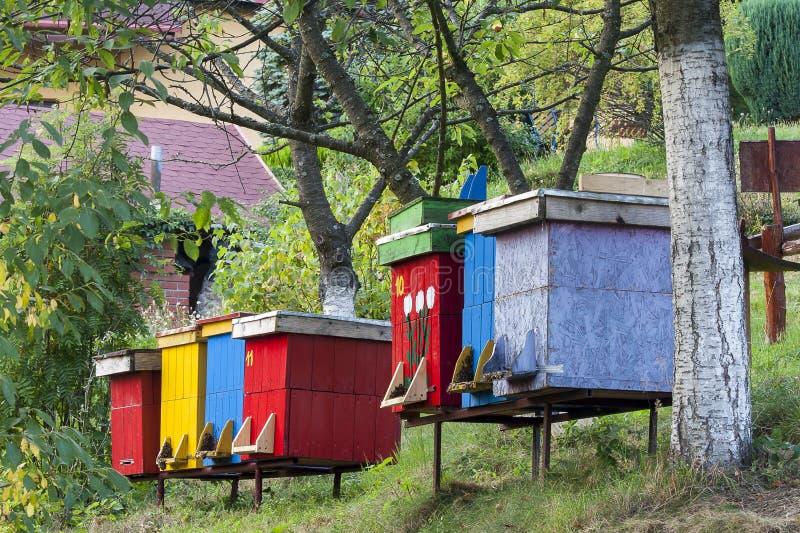 hives foto de stock