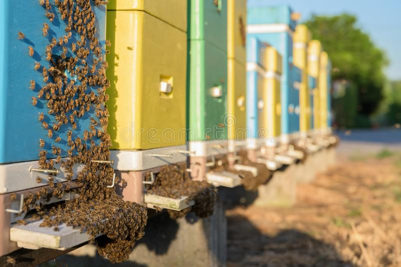 Hives in an apiary in a green garden. stock photo
