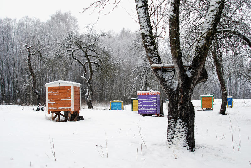 Hives cover snow colorful bee house winter tree. Hives cover snow. Colorful bee house between winter apple trees royalty free stock image