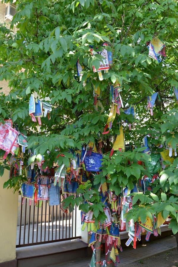 Hiymorin, etiquetas budistas da cor com uma oração pendura em uma árvore imagens de stock