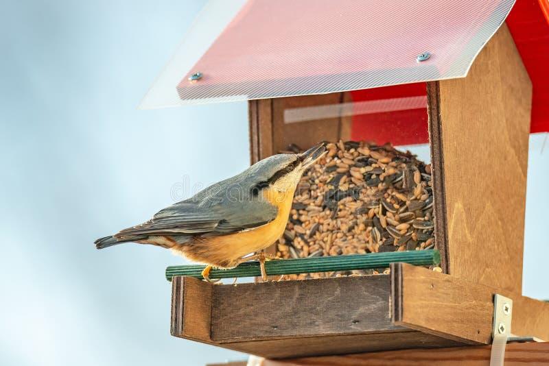 Hjälp för att små stadsfåglar ska fortleva under vintersäsong med a arkivbilder