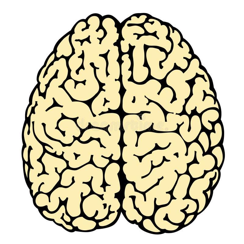 hjärna royaltyfri illustrationer
