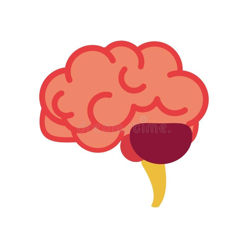 Hjärna för anatomikroppsdel för inre organ nervsystem vektor illustrationer