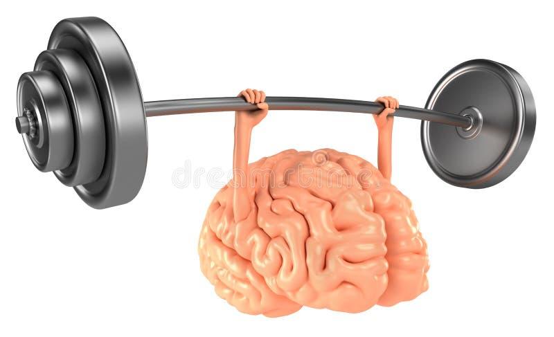 Hjärnan övar vektor illustrationer
