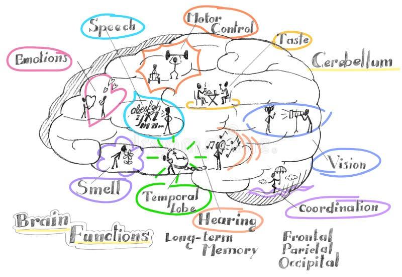 Hjärnan fungerar vektorn royaltyfri illustrationer