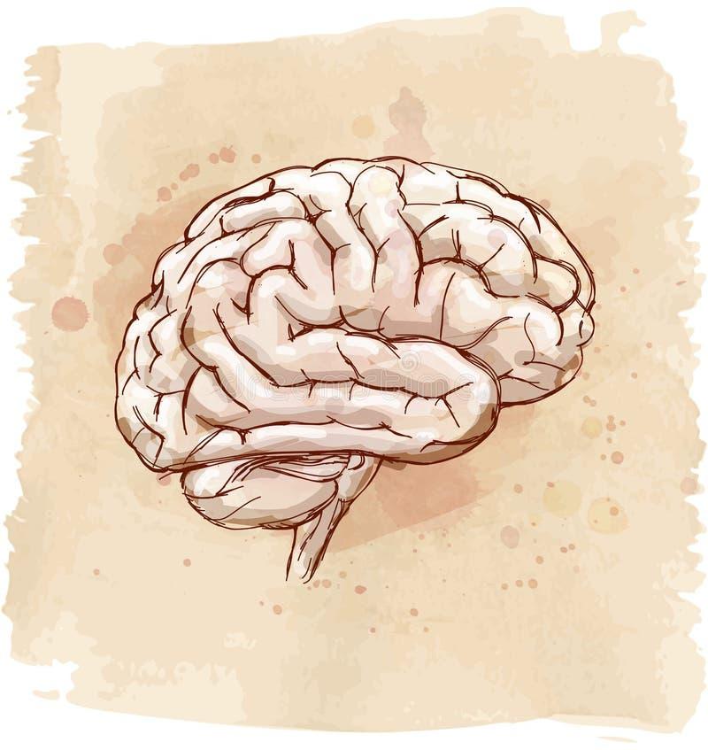 Hjärnan skissar stock illustrationer