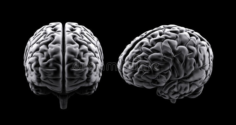 hjärnhuman stock illustrationer