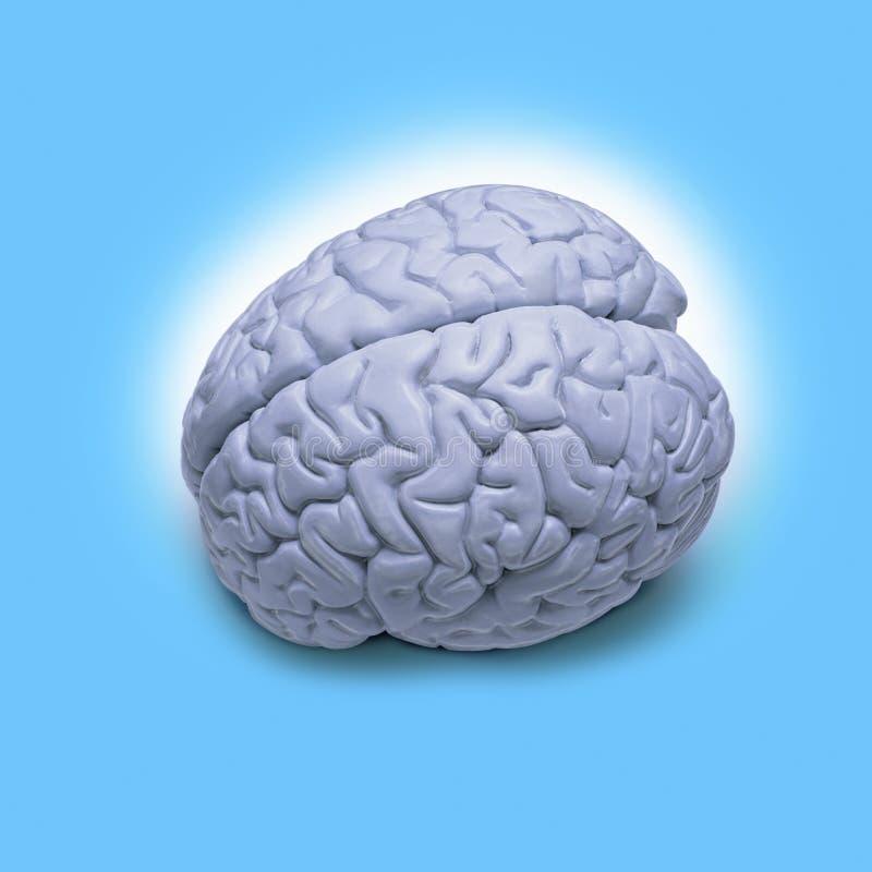 hjärnhuman royaltyfri illustrationer