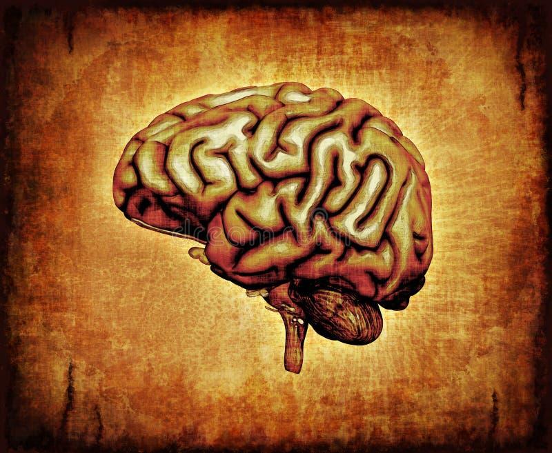 hjärnhumanparchment stock illustrationer