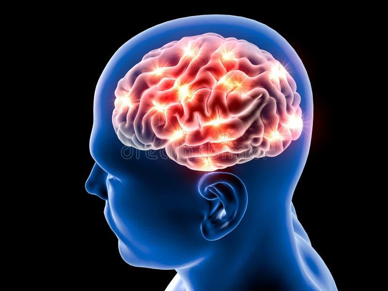 Hjärnneuronssynapse, anatomi, head profil, royaltyfri illustrationer