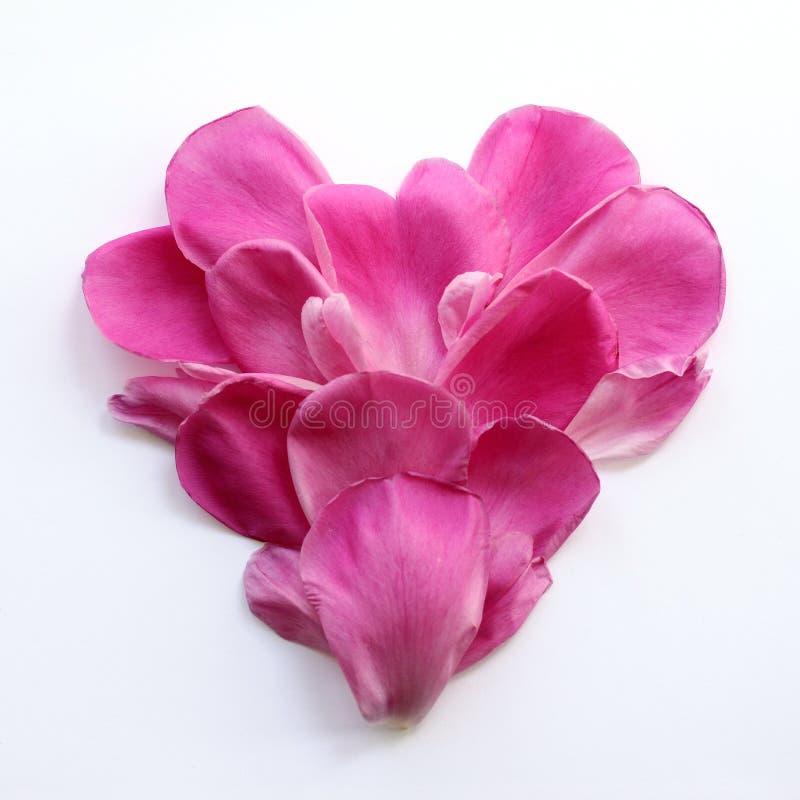Hjärta av delikata rosa kronblad royaltyfria bilder