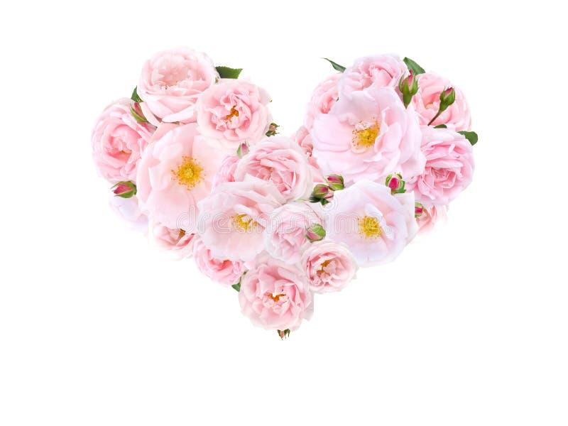 Hjärta av gränsen - rosa rosor och knoppar arkivfoto