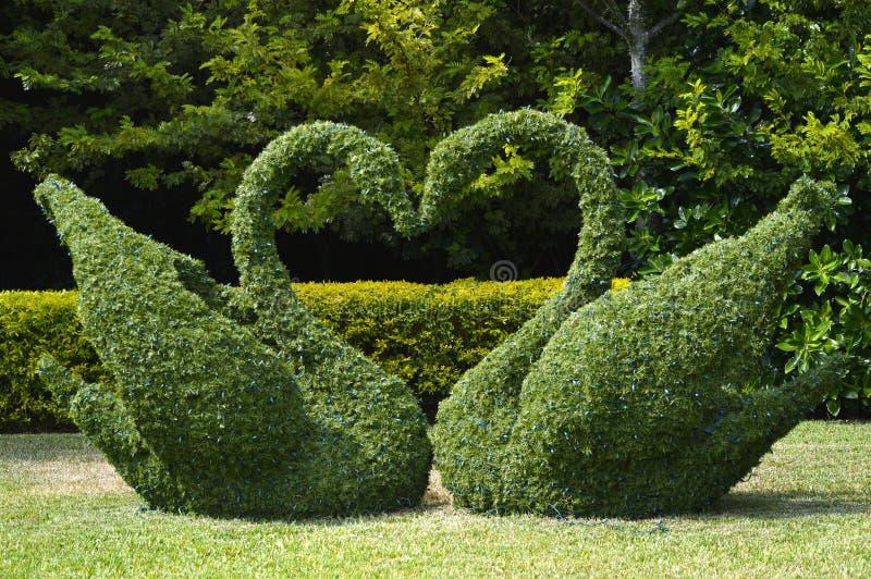 Hjärta för Topiarysvanförälskelse royaltyfri bild