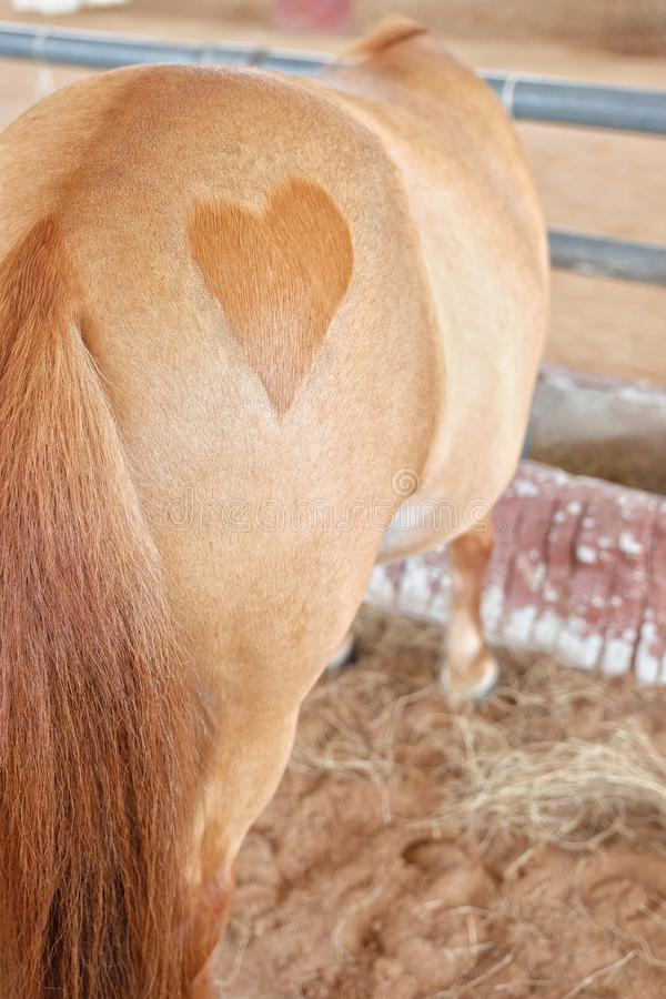 hjärta formade på botten av en häst fotografering för bildbyråer