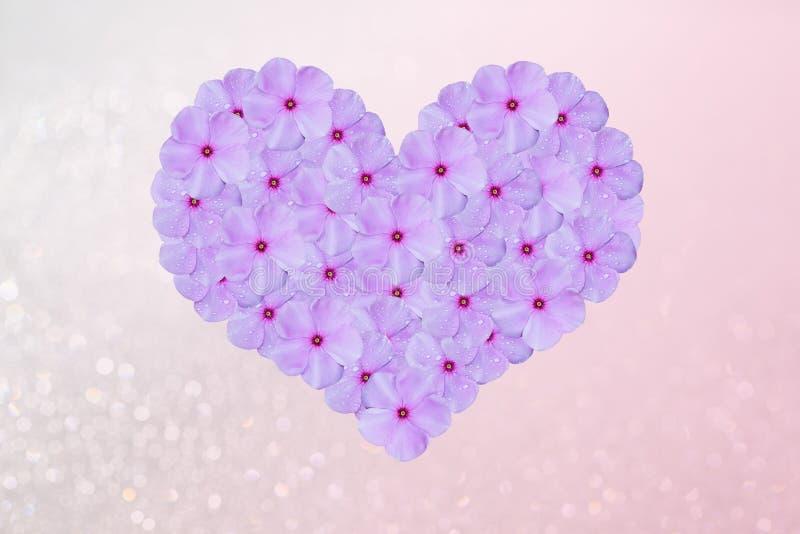 Hjärta formade pastellfärgade rosa färger som blommar blommor på suddig rosa bokehbakgrund royaltyfria foton
