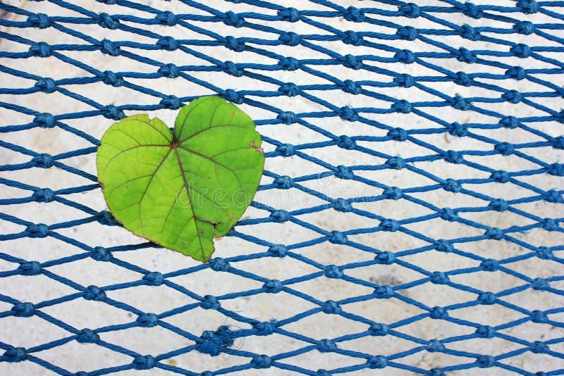 Hjärta-formade sidor på det netto royaltyfria bilder