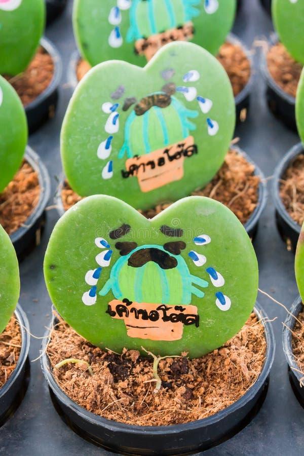 Hjärta formade växten Kerrii Hoya med det målade rosor och meddelandet royaltyfri foto