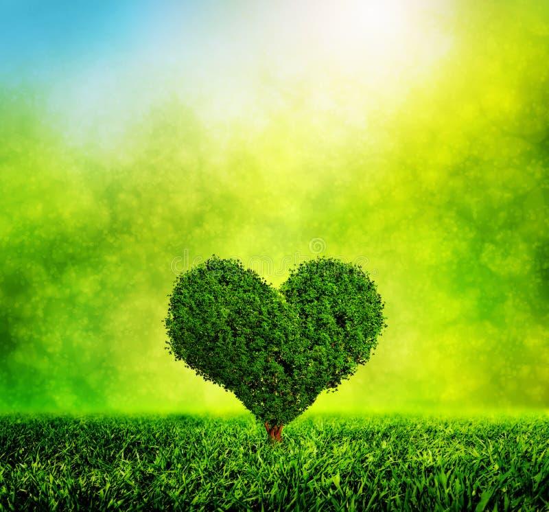 Hjärta format träd som växer på grönt gräs Förälskelse royaltyfria foton