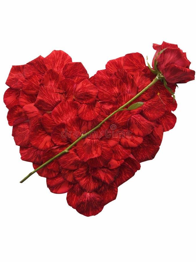 hjärta gjorda petals steg arkivfoton