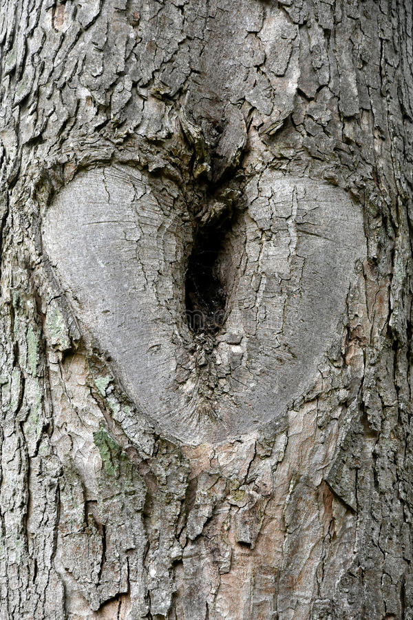 Hjärta i ett träd fotografering för bildbyråer
