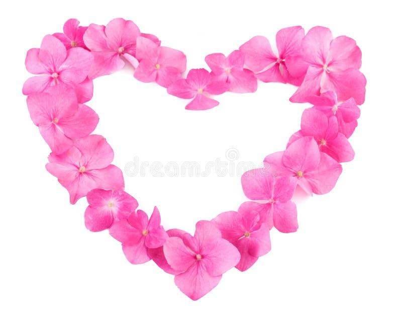 Hjärta som göras av rosa färger, blommar på vit bakgrund Naturlig modell med kopieringsutrymme arkivbild