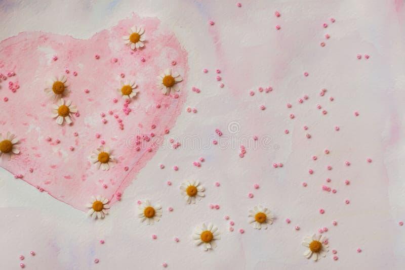 Hjärta som målas med vattenfärger och ny kamomill Spridda rosa färgpärlor Begrepp av förälskelse, romans, mjukhet vektor illustrationer