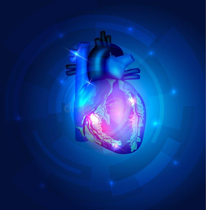 Hjärtaanatomi vektor illustrationer