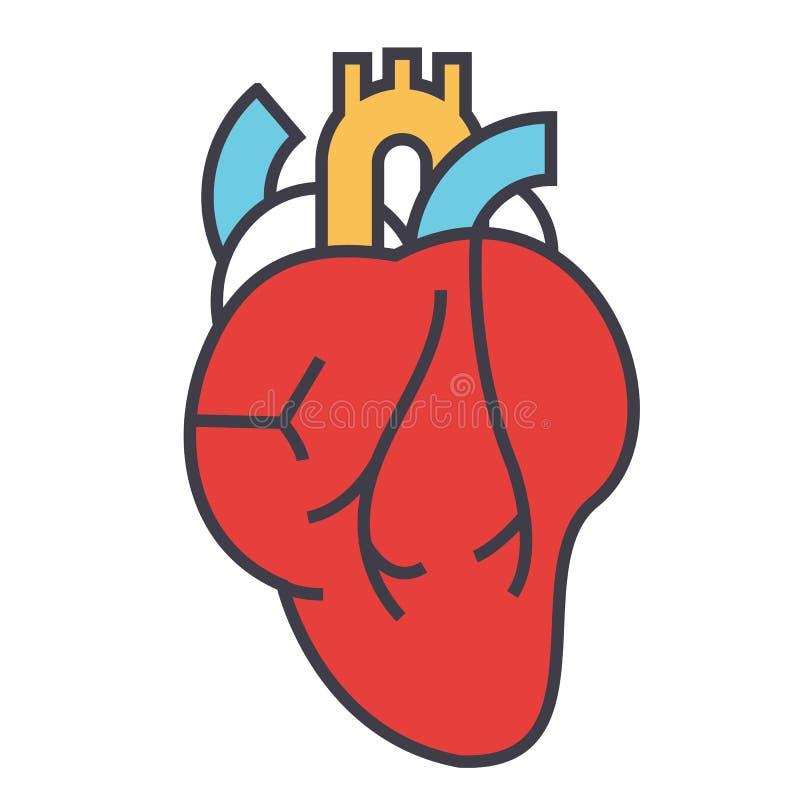 Hjärtaanatomi, kardiologibegrepp vektor illustrationer