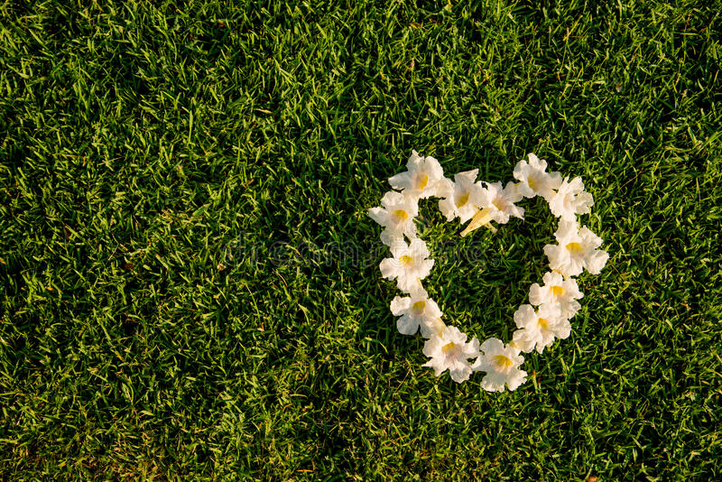 Hjärtaform för vita blommor på ett fält för gröna gräs arkivfoto