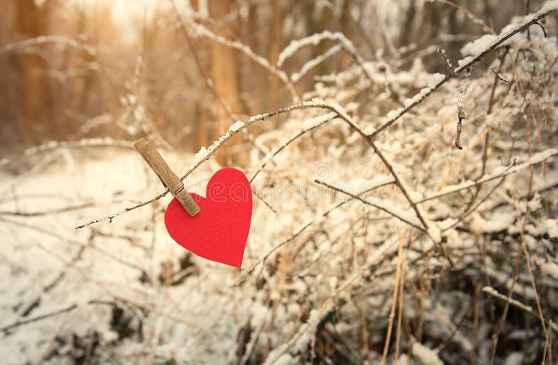 Hjärtaform på en snöig filial arkivfoton