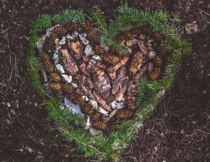Hjärtaform som göras ut ur, sörjer skället, sörjer kottar, vaggar och lossar lövverk royaltyfria bilder