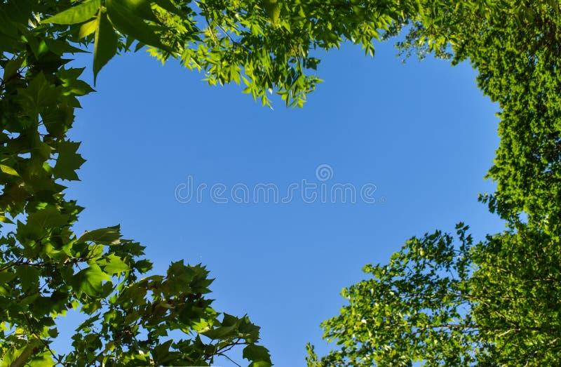 Hjärtaform till och med de gröna sidorna mot den blåa himlen Begreppsmässig idé för romantiker- eller ecoförälskelsesymbol för ab arkivfoton
