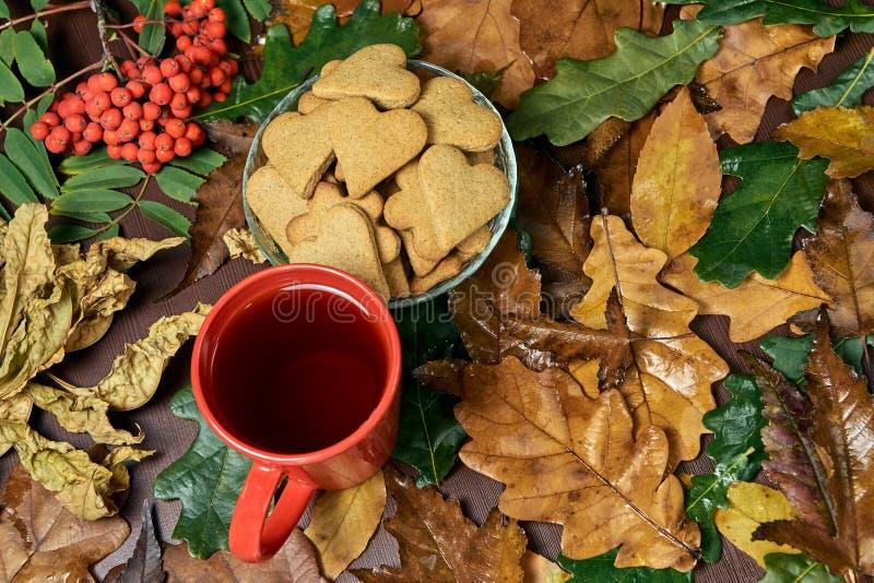 Hjärtakaka svart tea olika leaves isolerad rönnwhite för bakgrund filial arkivbild