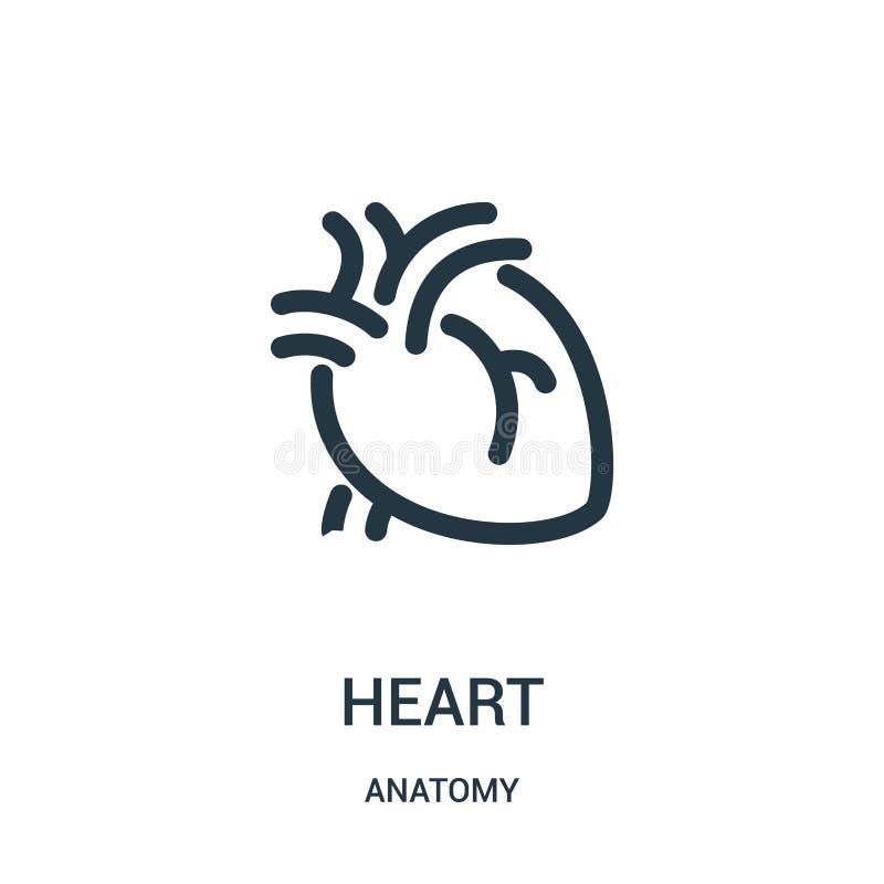 hjärtasymbolsvektor från anatomisamling Tunn linje illustration för vektor för hjärtaöversiktssymbol Linjärt symbol för bruk på r vektor illustrationer