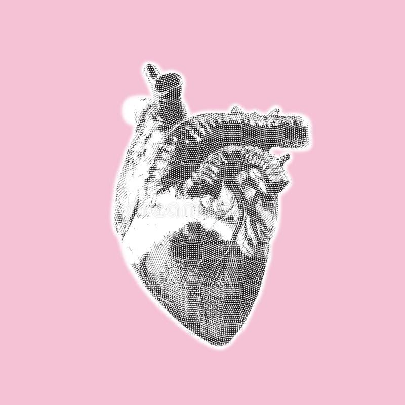 Hjärtatappning arkivbilder